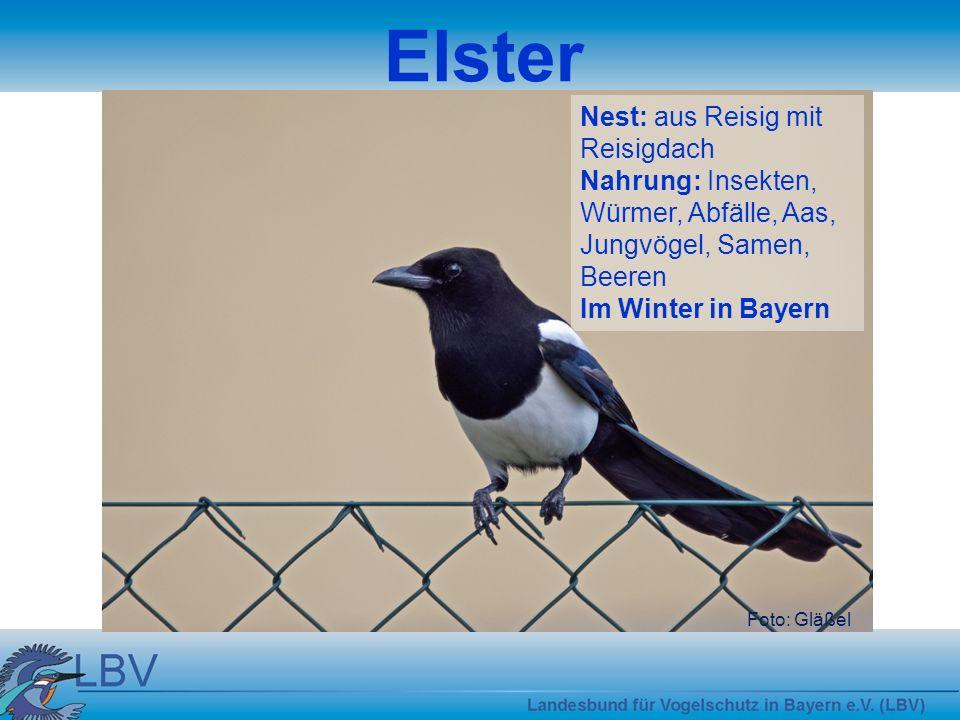 Elster Nest: aus Reisig mit Reisigdach
