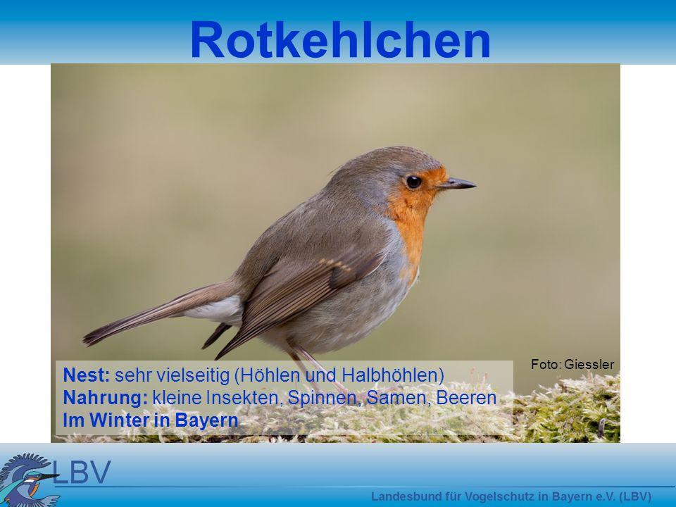 Rotkehlchen Nest: sehr vielseitig (Höhlen und Halbhöhlen)