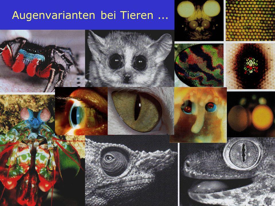 Augenvarianten bei Tieren ...