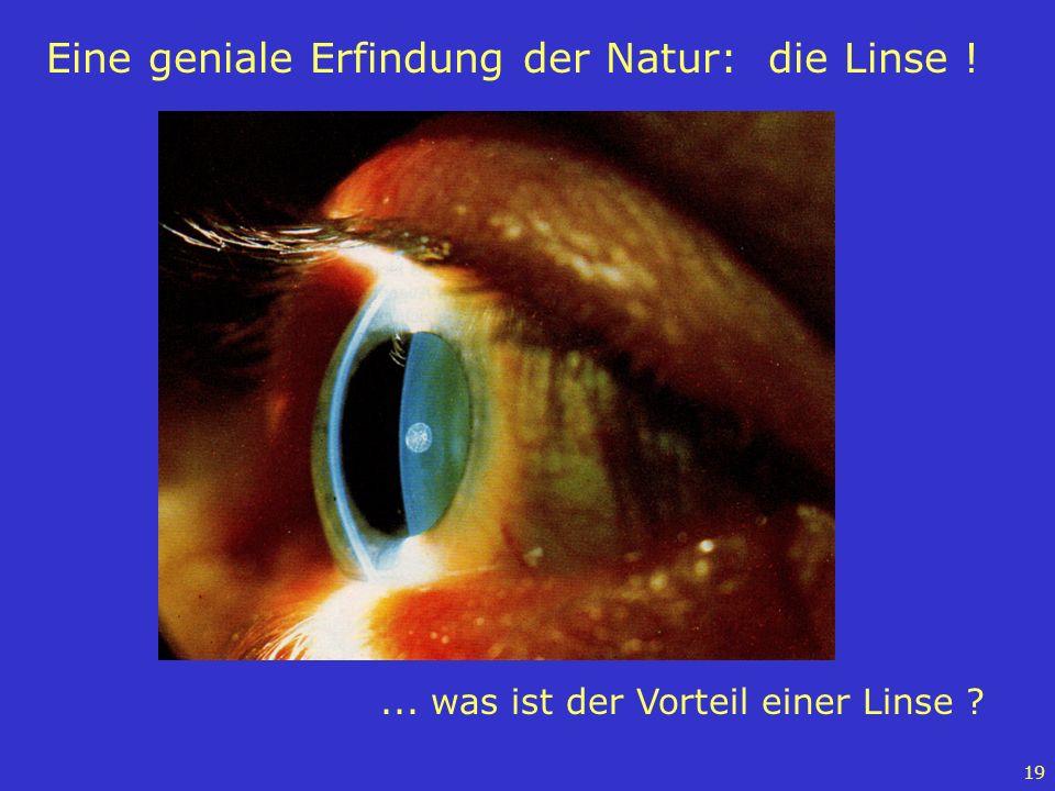 Eine geniale Erfindung der Natur: die Linse !