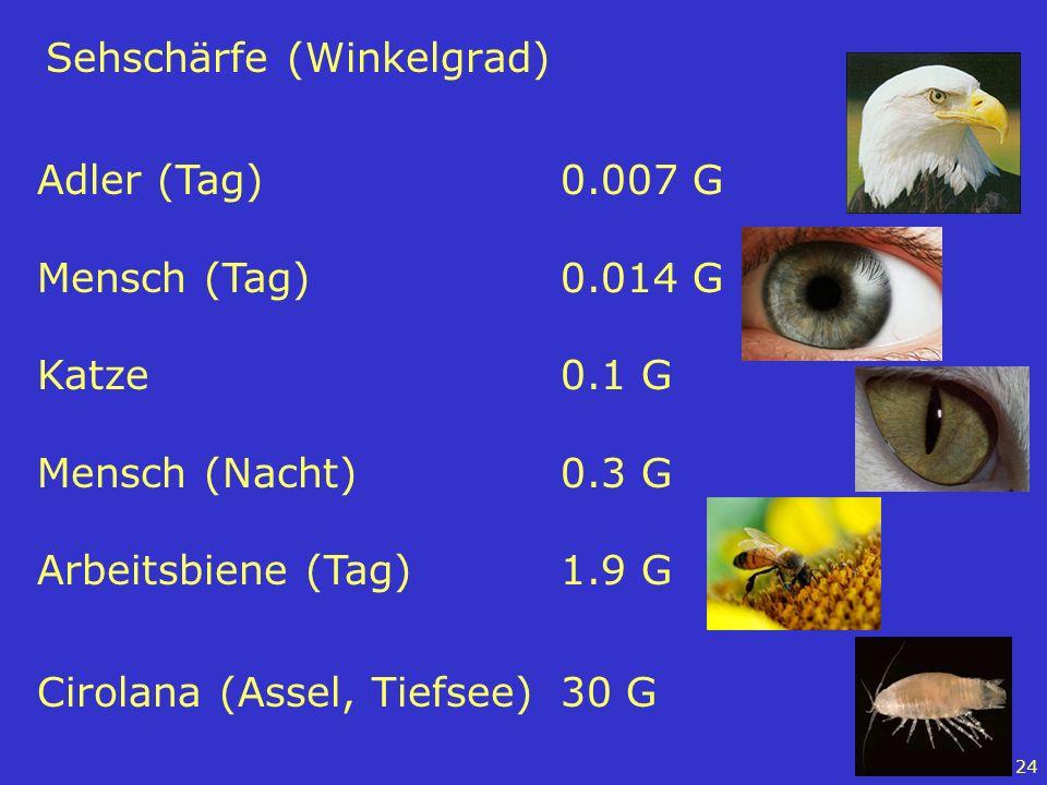Sehschärfe (Winkelgrad)