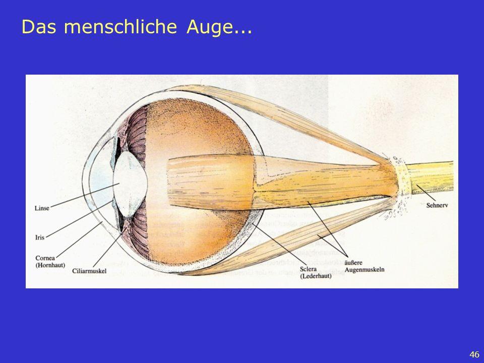 Das menschliche Auge...