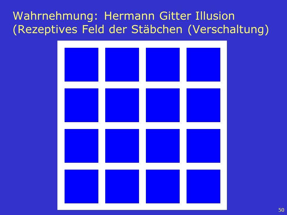 Wahrnehmung: Hermann Gitter Illusion (Rezeptives Feld der Stäbchen (Verschaltung)