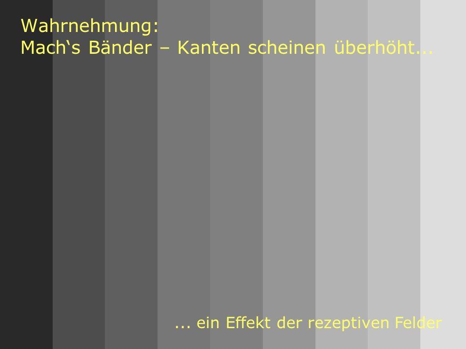 Wahrnehmung: Mach's Bänder – Kanten scheinen überhöht...