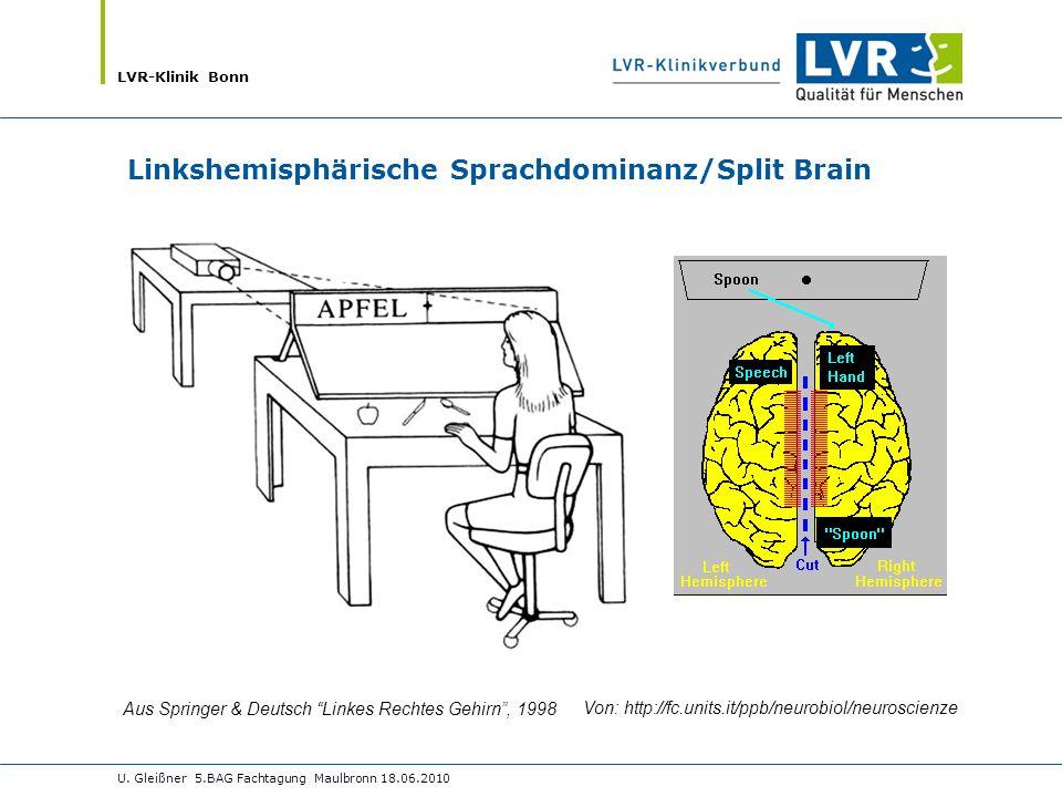 Aus Springer & Deutsch Linkes Rechtes Gehirn , 1998