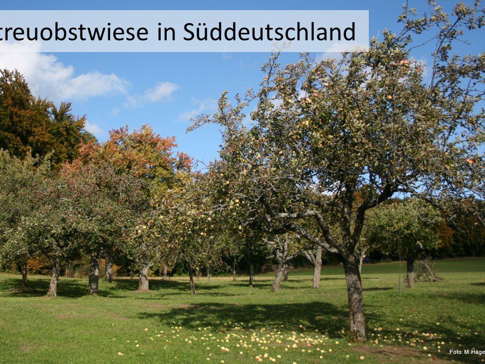 Streuobstwiese in Süddeutschland