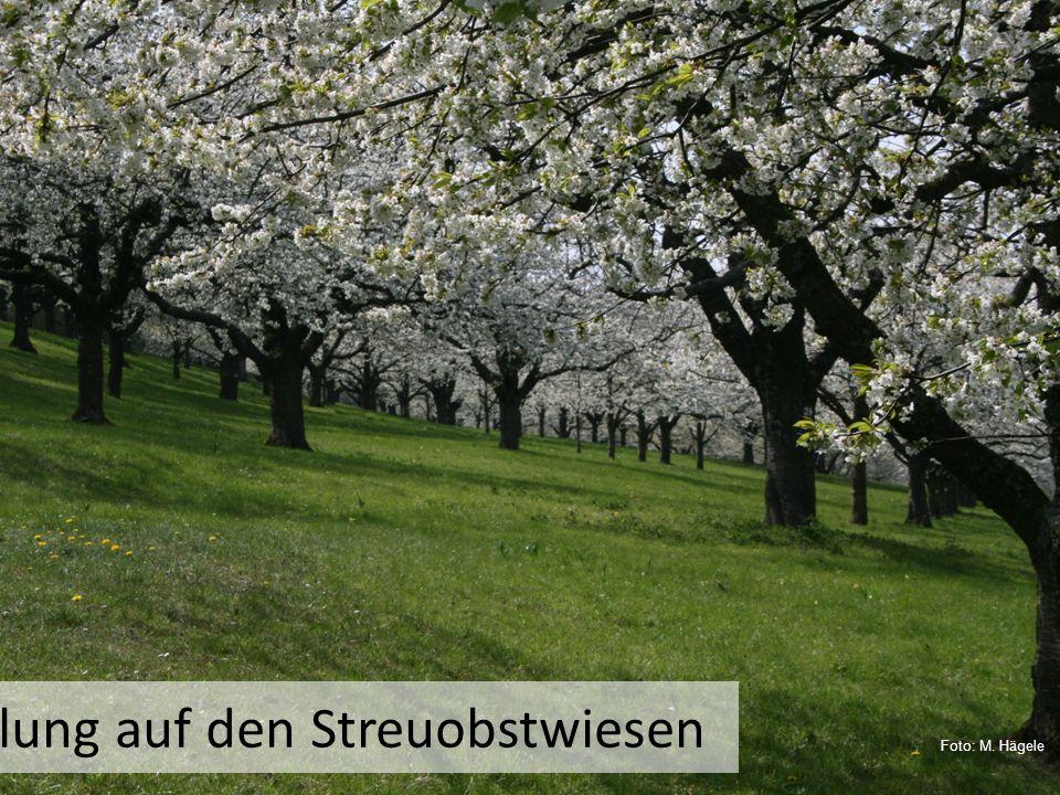 Frühlung auf den Streuobstwiesen