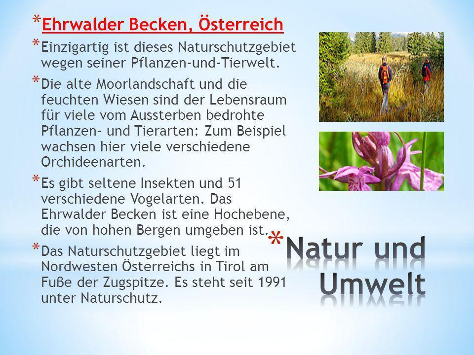 Natur und Umwelt Ehrwalder Becken, Österreich