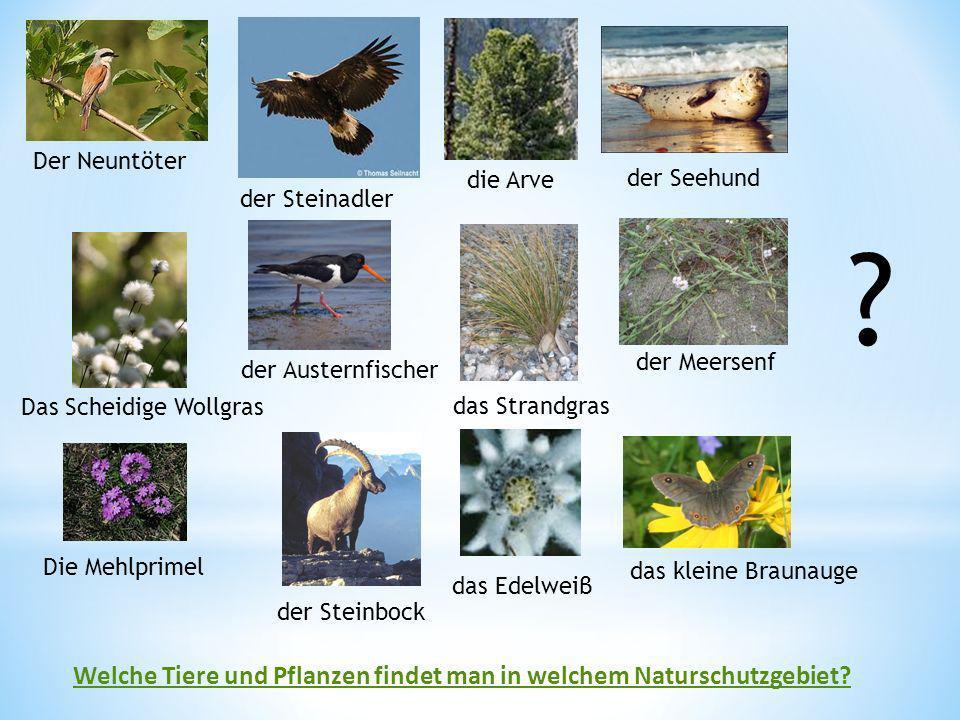 Welche Tiere und Pflanzen findet man in welchem Naturschutzgebiet