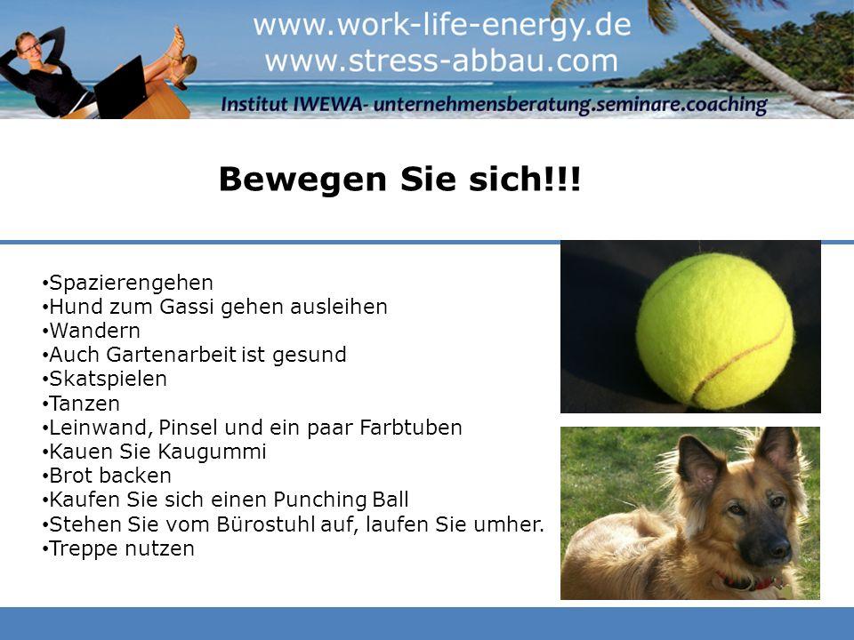 Bewegen Sie sich!!! Spazierengehen Hund zum Gassi gehen ausleihen