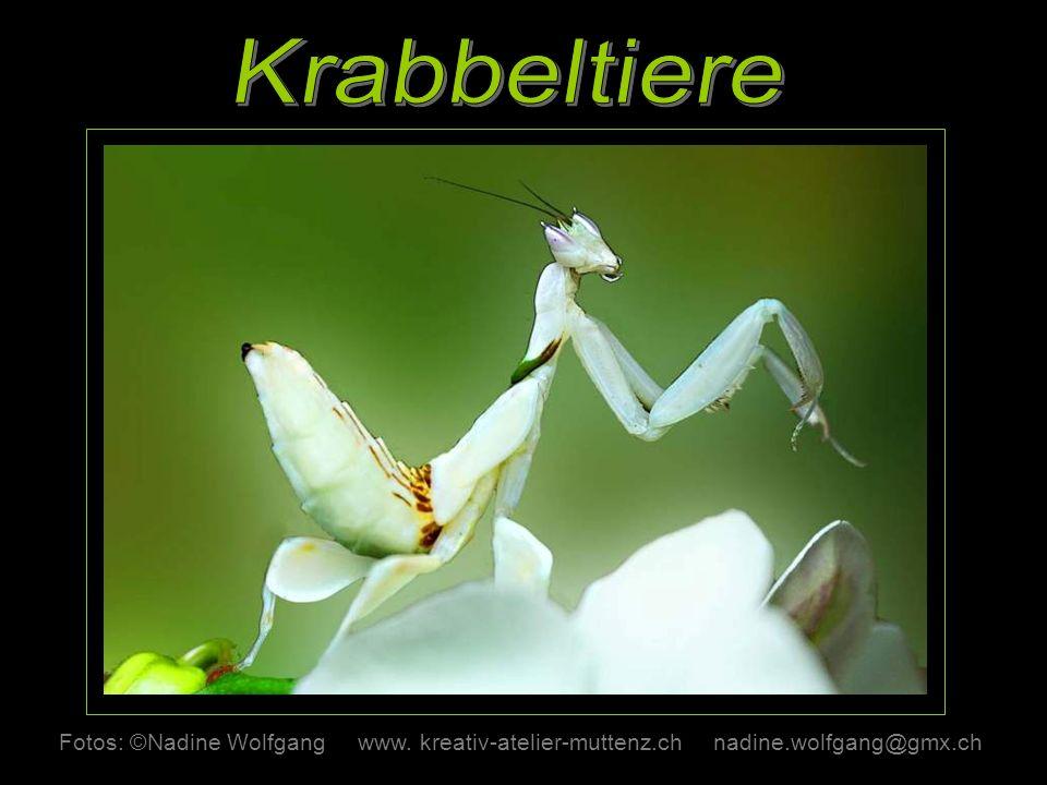 Krabbeltiere Fotos: ©Nadine Wolfgang www. kreativ-atelier-muttenz.ch nadine.wolfgang@gmx.ch