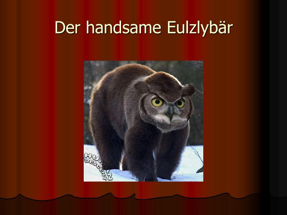 Der handsame Eulzlybär