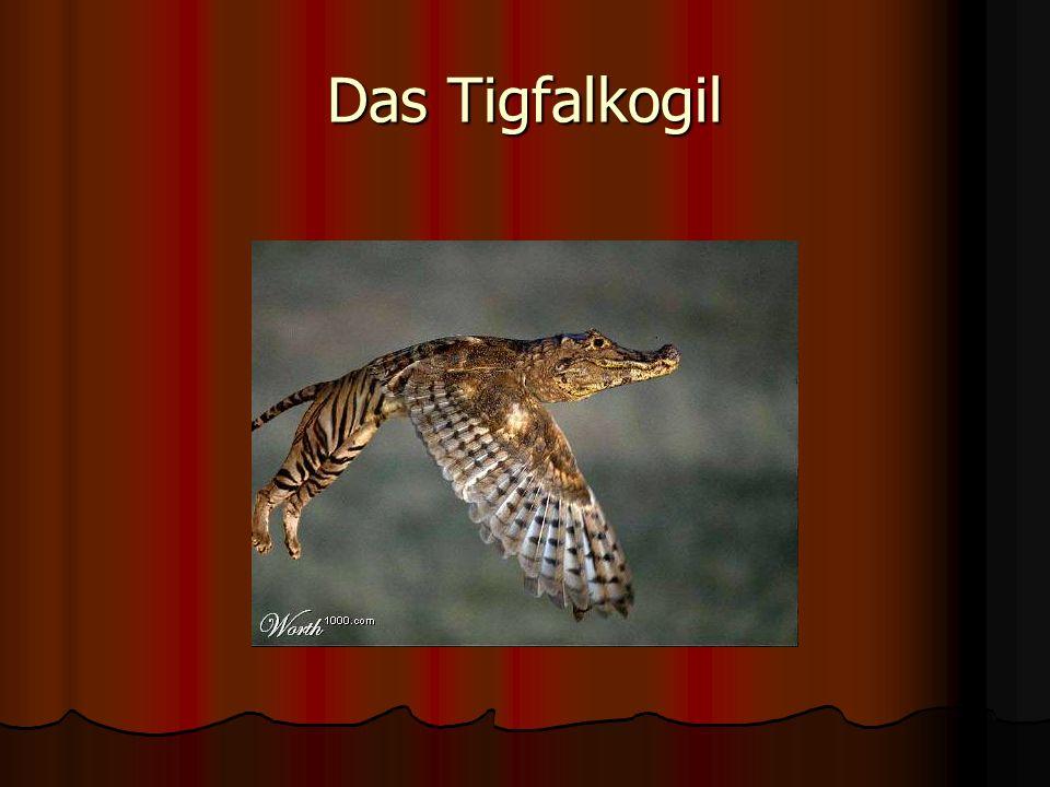 Das Tigfalkogil