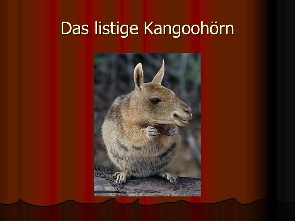 Das listige Kangoohörn