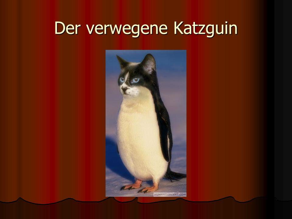 Der verwegene Katzguin