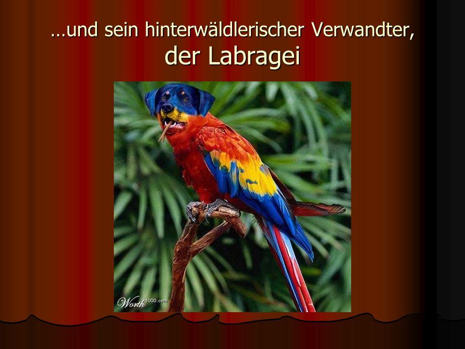 …und sein hinterwäldlerischer Verwandter, der Labragei