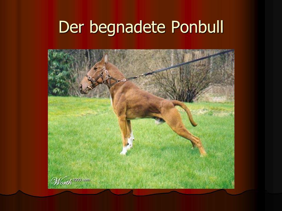 Der begnadete Ponbull