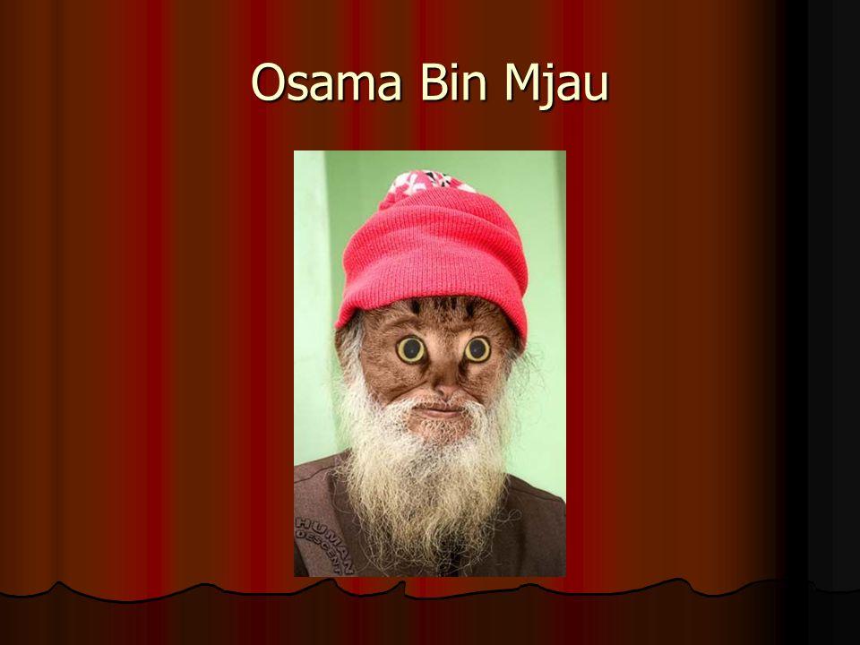 Osama Bin Mjau