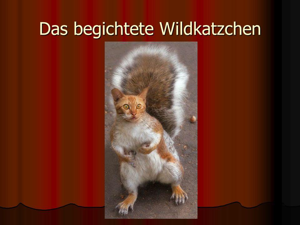 Das begichtete Wildkatzchen