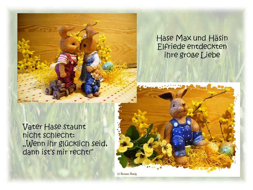 Hase Max und Häsin Elfriede entdeckten ihre große Liebe