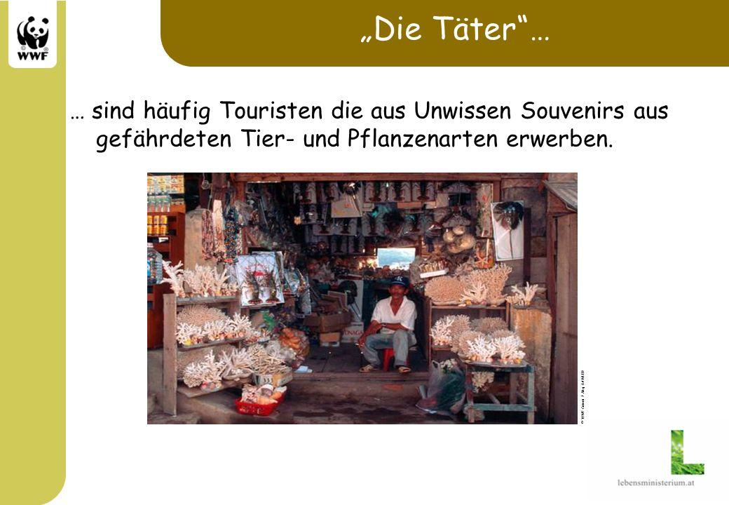 """""""Die Täter … … sind häufig Touristen die aus Unwissen Souvenirs aus gefährdeten Tier- und Pflanzenarten erwerben."""