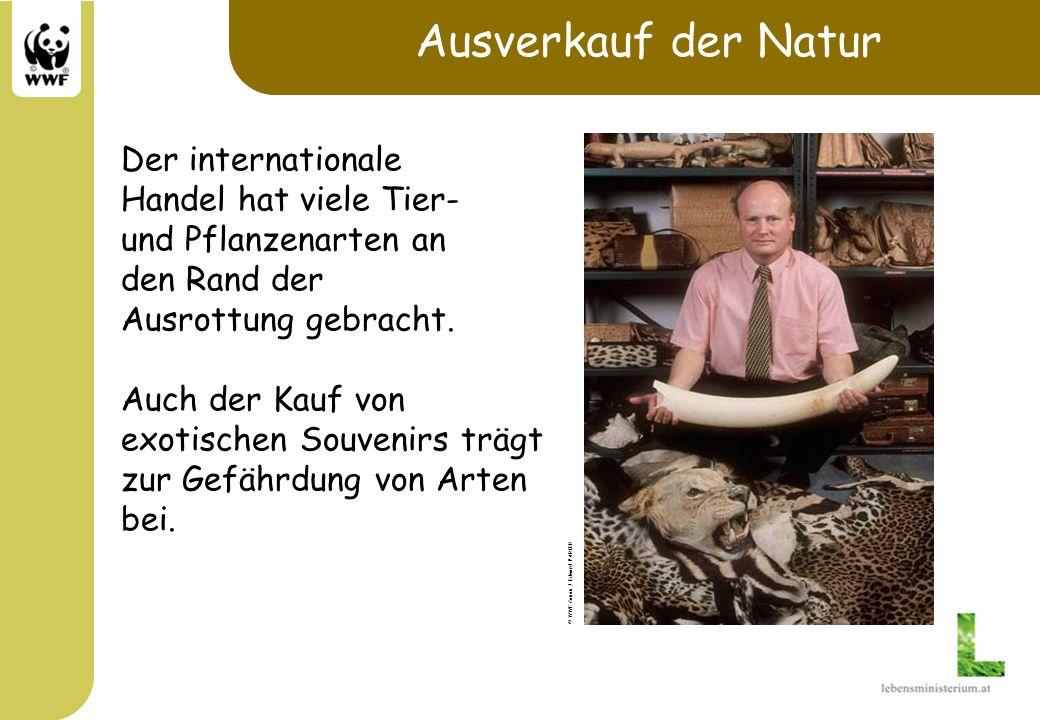 Ausverkauf der Natur Der internationale Handel hat viele Tier-