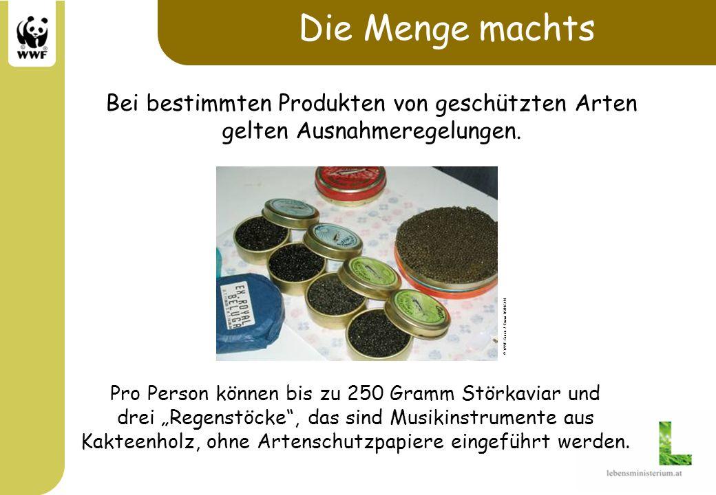 Pro Person können bis zu 250 Gramm Störkaviar und