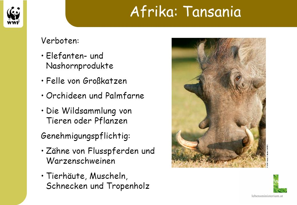 Afrika: Tansania Verboten: Elefanten- und Nashornprodukte