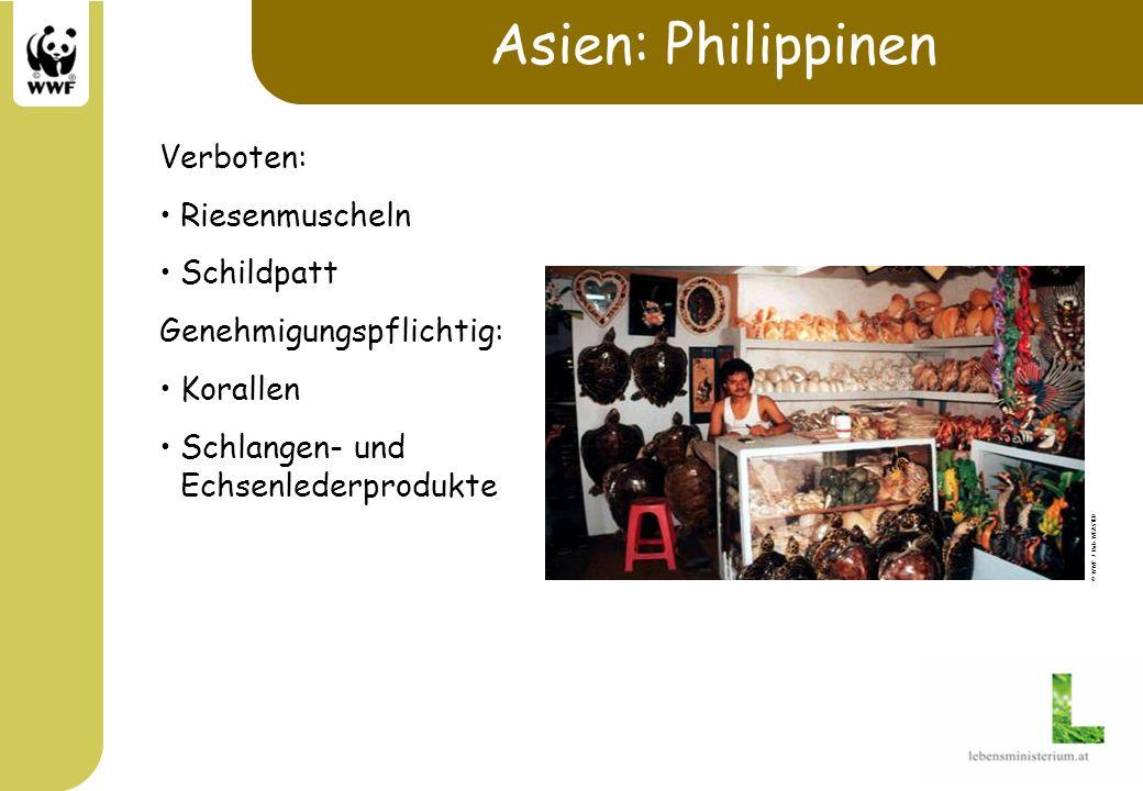 Asien: Philippinen Verboten: Riesenmuscheln Schildpatt