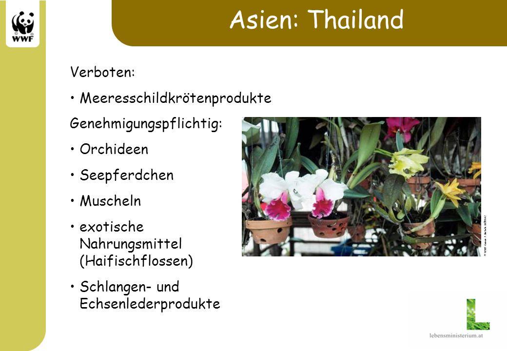 Asien: Thailand Verboten: Meeresschildkrötenprodukte