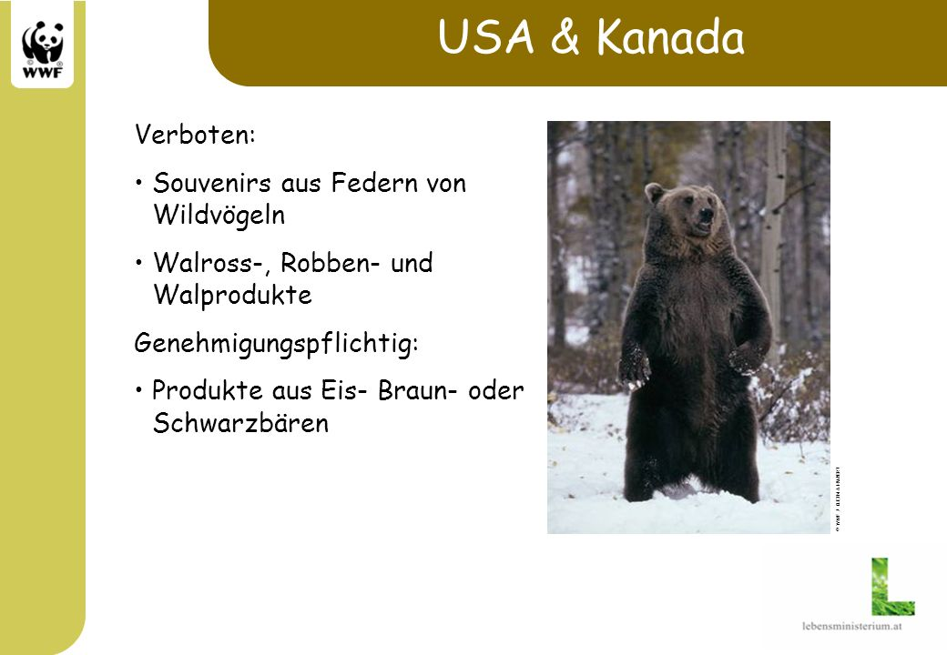 USA & Kanada Verboten: Souvenirs aus Federn von Wildvögeln