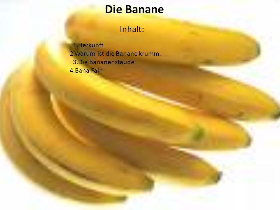 Inhalt: Die Banane 1.Herkunft 2.Warum ist die Banane krumm.