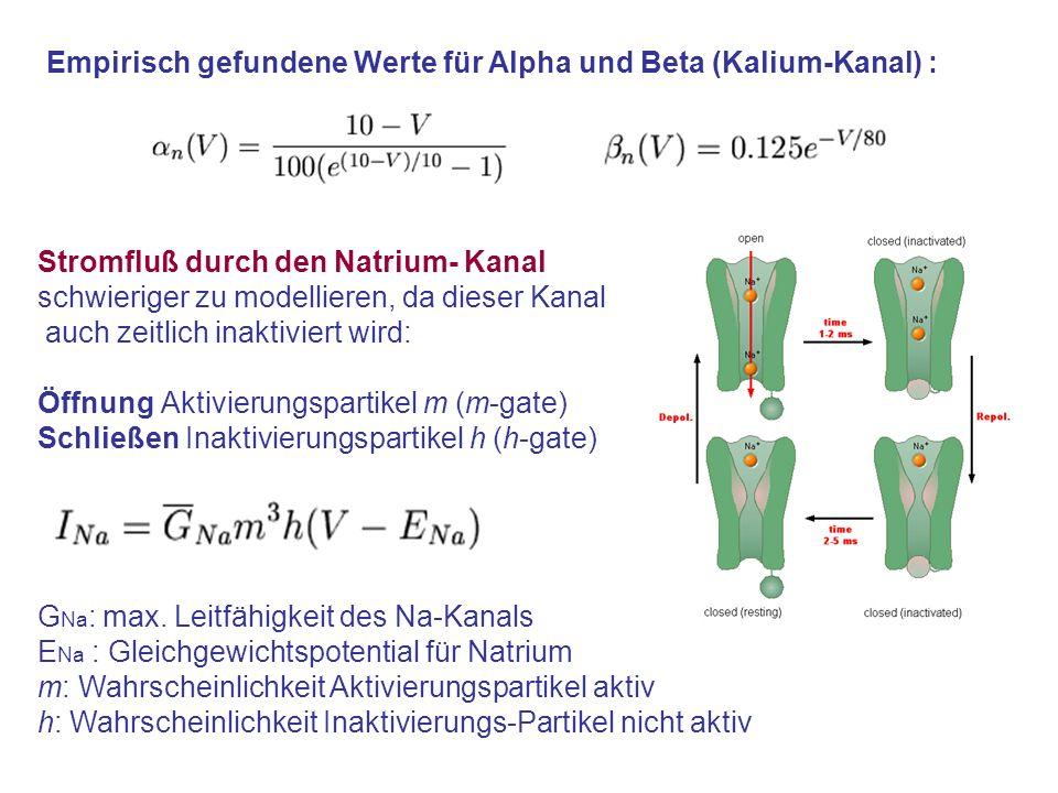 Empirisch gefundene Werte für Alpha und Beta (Kalium-Kanal) :