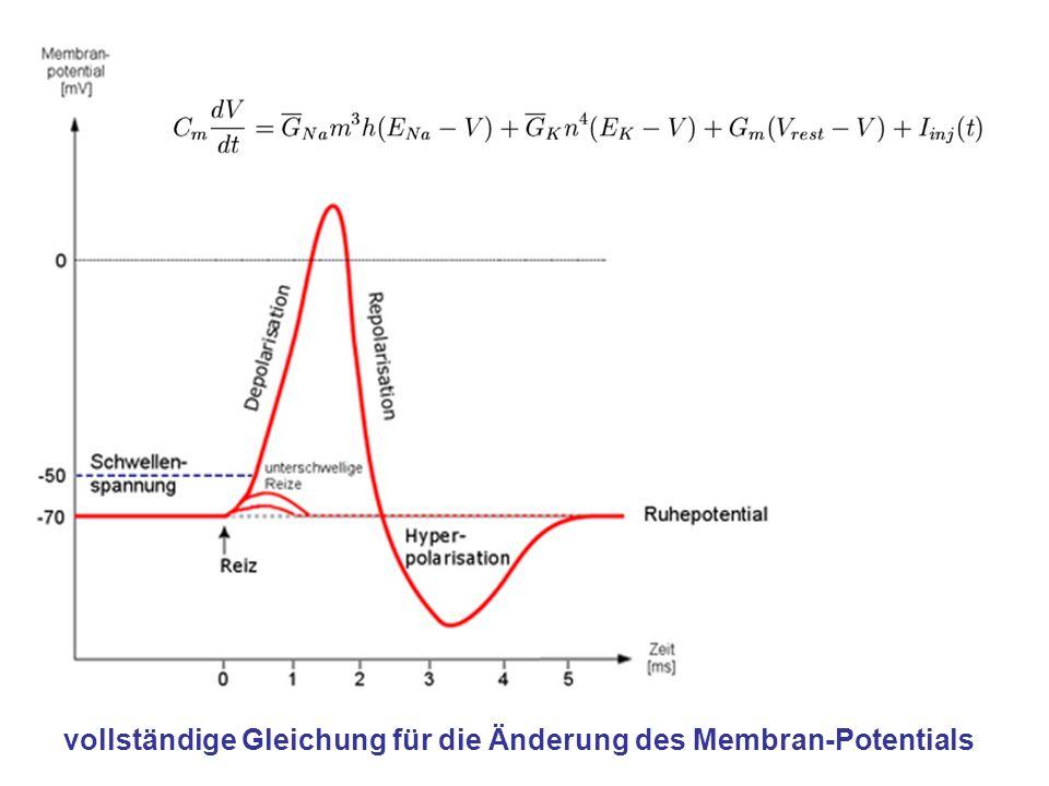 vollständige Gleichung für die Änderung des Membran-Potentials