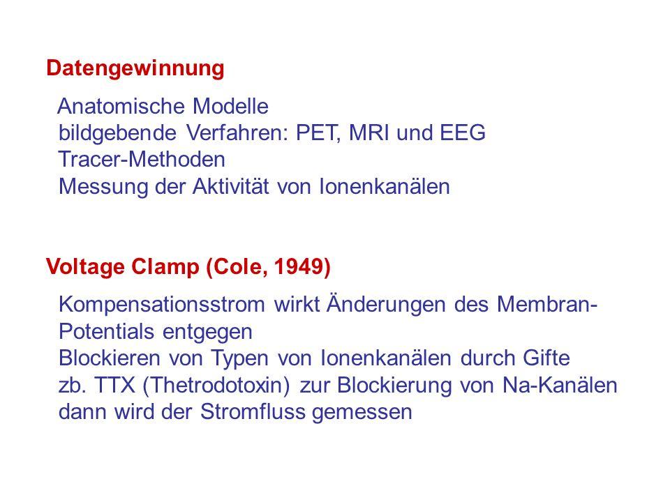 Datengewinnung Anatomische Modelle. bildgebende Verfahren: PET, MRI und EEG. Tracer-Methoden. Messung der Aktivität von Ionenkanälen.