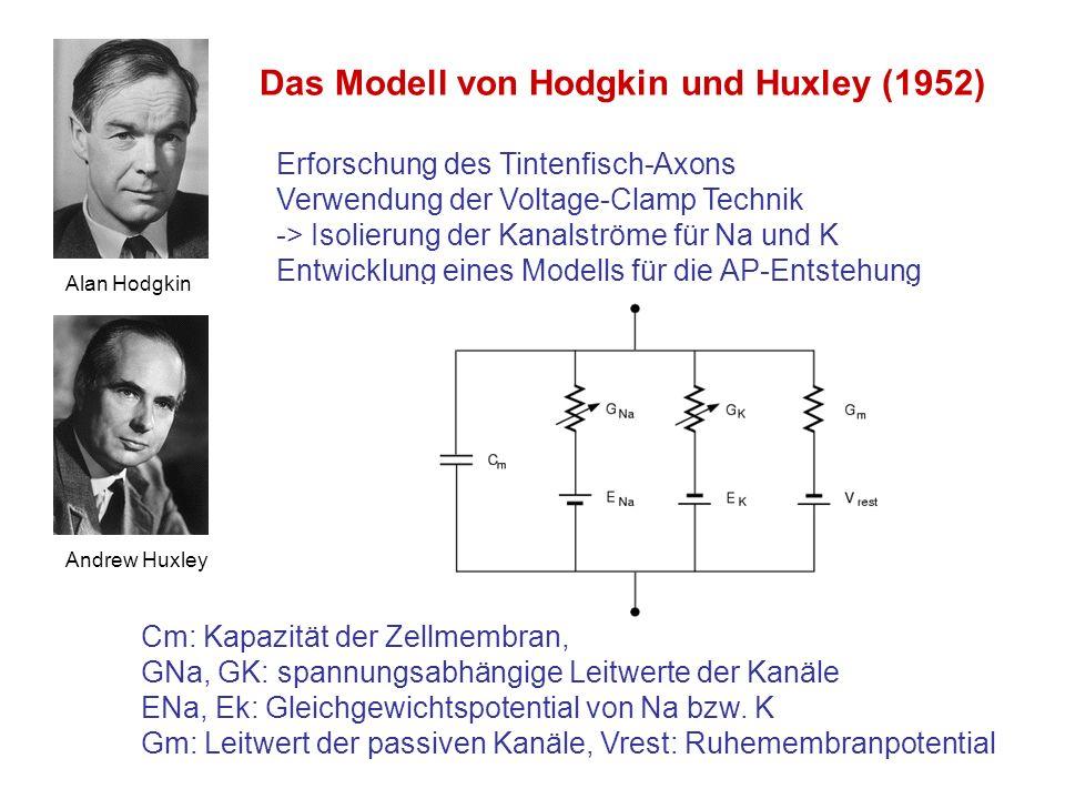 Das Modell von Hodgkin und Huxley (1952)