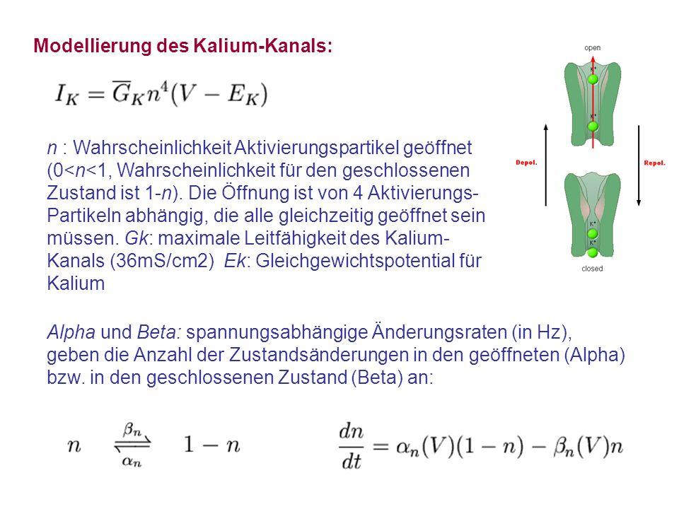 Modellierung des Kalium-Kanals: