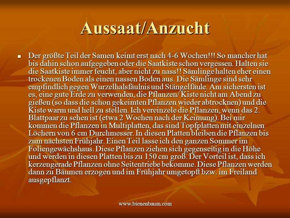 Aussaat/Anzucht