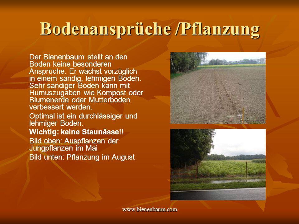 Bodenansprüche /Pflanzung