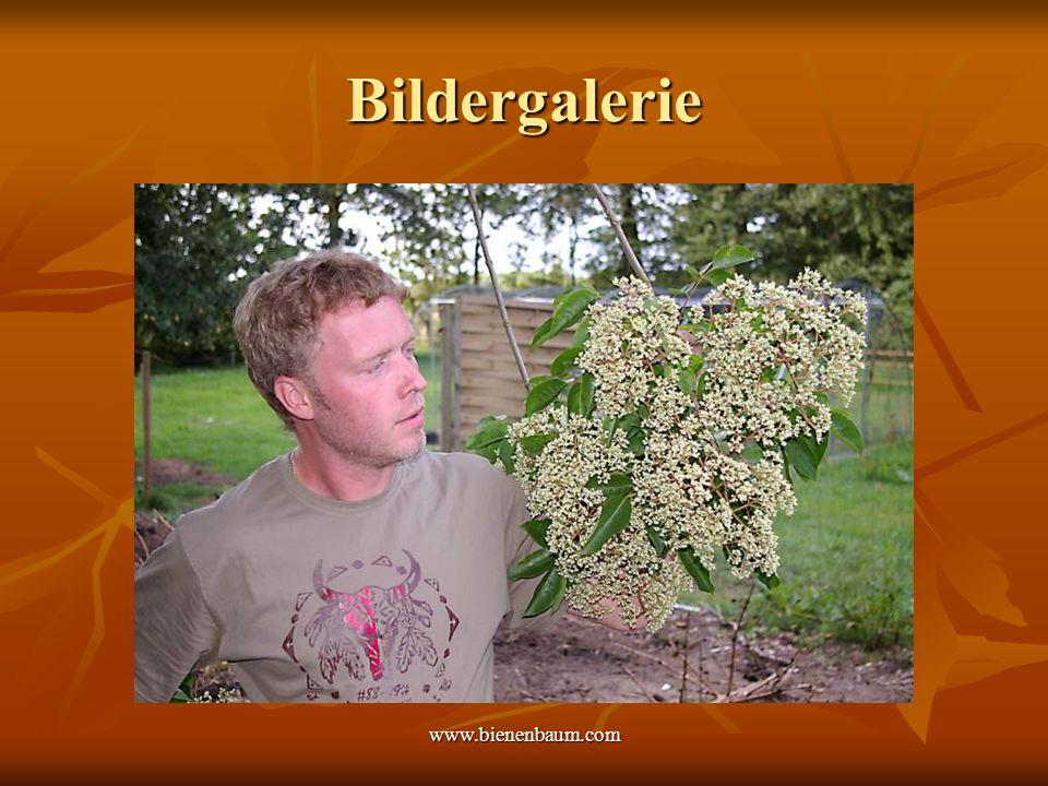 Bildergalerie www.bienenbaum.com