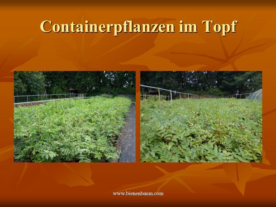 Containerpflanzen im Topf