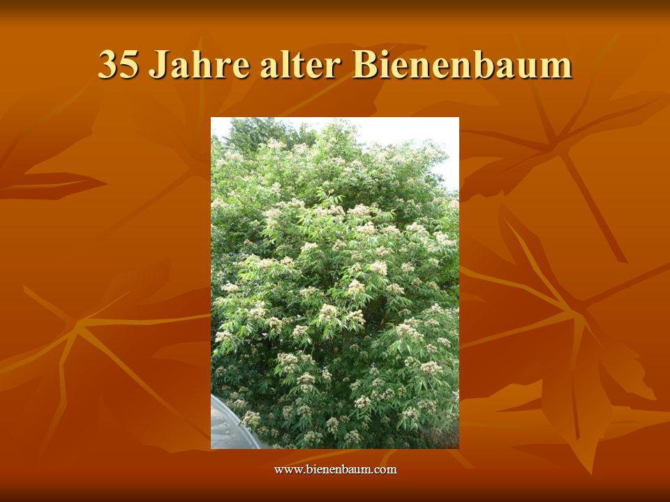35 Jahre alter Bienenbaum