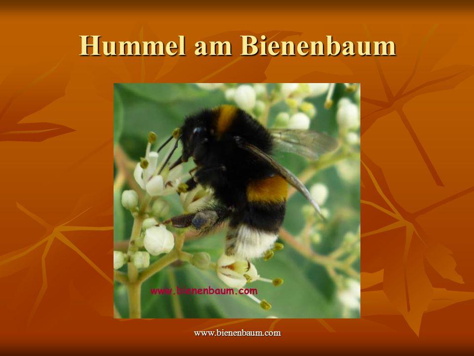 Hummel am Bienenbaum www.bienenbaum.com