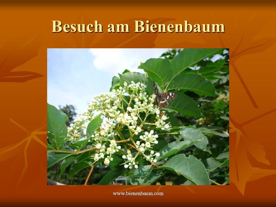 Besuch am Bienenbaum www.bienenbaum.com
