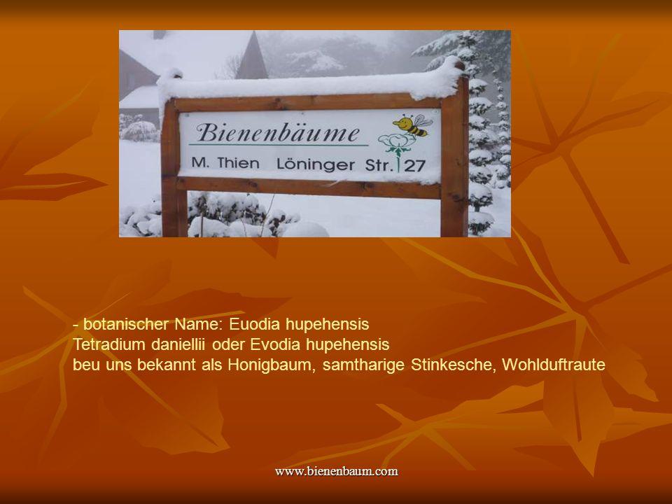 - botanischer Name: Euodia hupehensis Tetradium daniellii oder Evodia hupehensis beu uns bekannt als Honigbaum, samtharige Stinkesche, Wohlduftraute