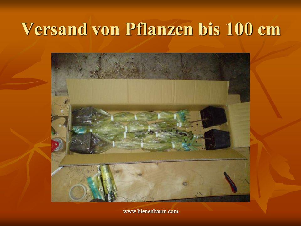 Versand von Pflanzen bis 100 cm