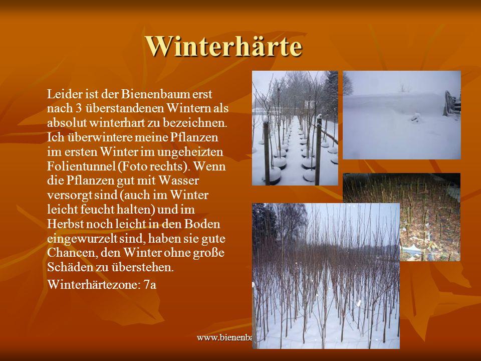 Winterhärte