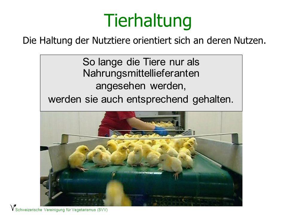 Die Haltung der Nutztiere orientiert sich an deren Nutzen.