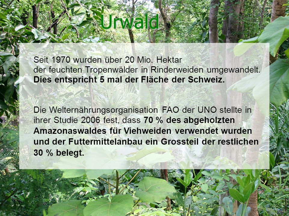 Urwald Seit 1970 wurden über 20 Mio. Hektar