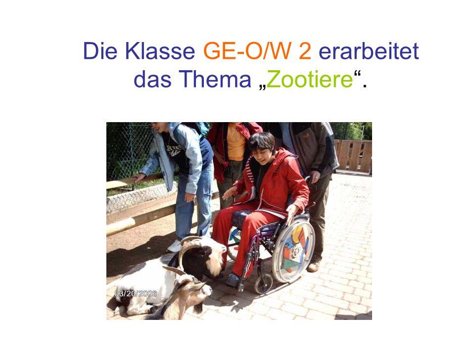 """Die Klasse GE-O/W 2 erarbeitet das Thema """"Zootiere ."""